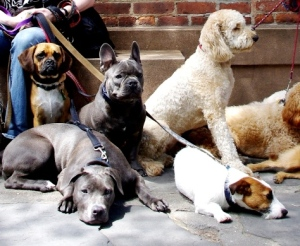 City dogs come in all sizes. (Full disclosure- these are New York City dogs)
