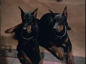 Remember Higgin's dobermans from Magnum PI?  They are in your brain and they are bored.